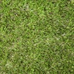 Luxury Plus Artificial Grass