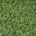 classic meadow grass
