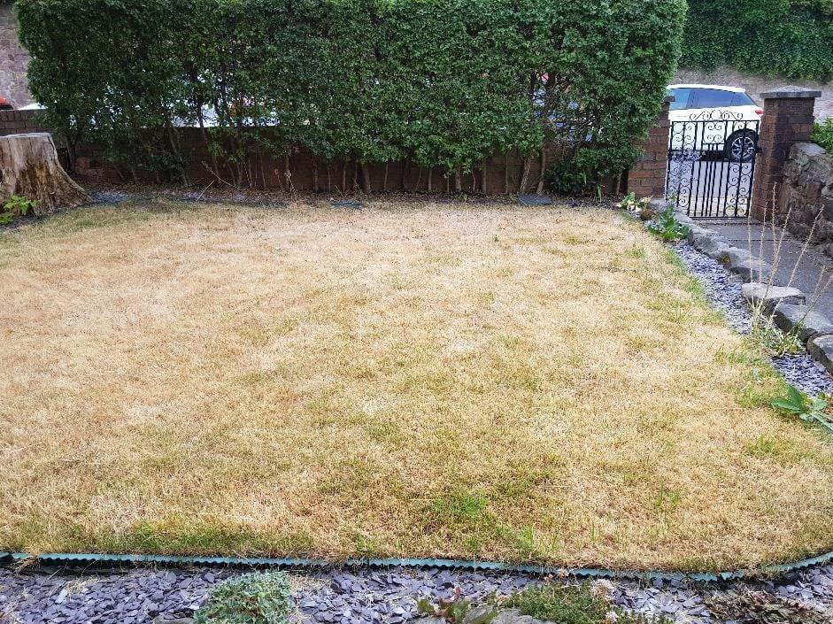 dead natural grass