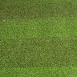 Stripy Grass